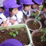 栽培する園児